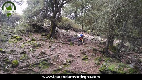Tour Enduro Sardegna dalla barbagia all''ogliastra: bosco scivoloso con radici